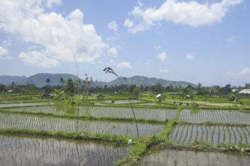 ricefields and mountains
